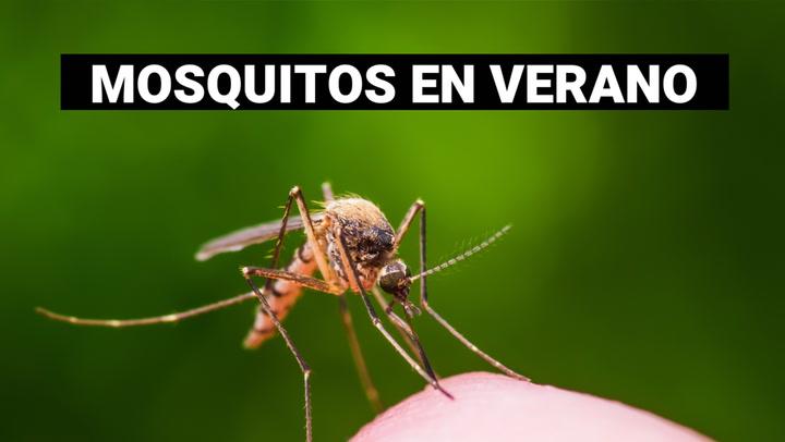 Cómo evitar a los molestos mosquitos en verano