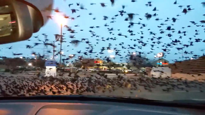 – Jepp, nå får jeg fuglebæsj på panseret
