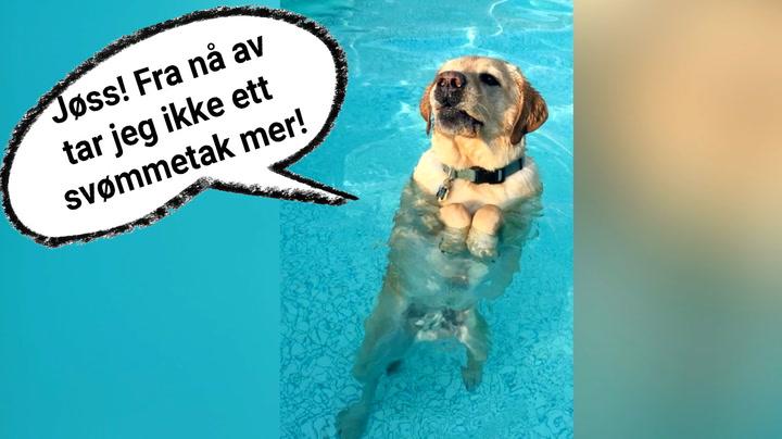 Her får hunden en aha-opplevelse midt i svømmeturen