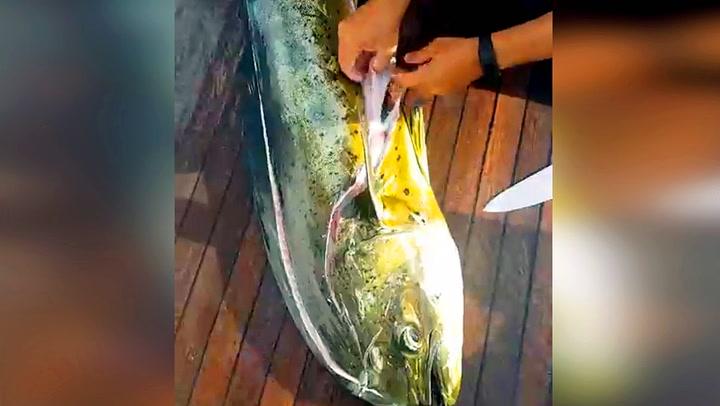 Fiskerne gjorde dystert funn i fiskens mage