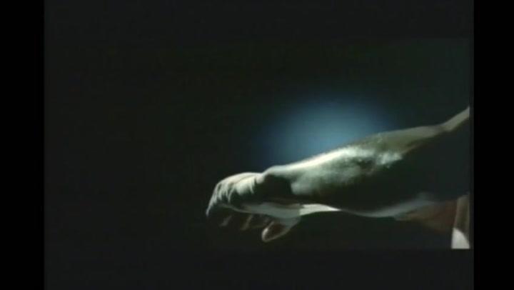 Beautiful Boxer - Trailer