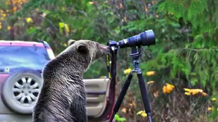 Grizzlybjørn med utrolig blinkskudd