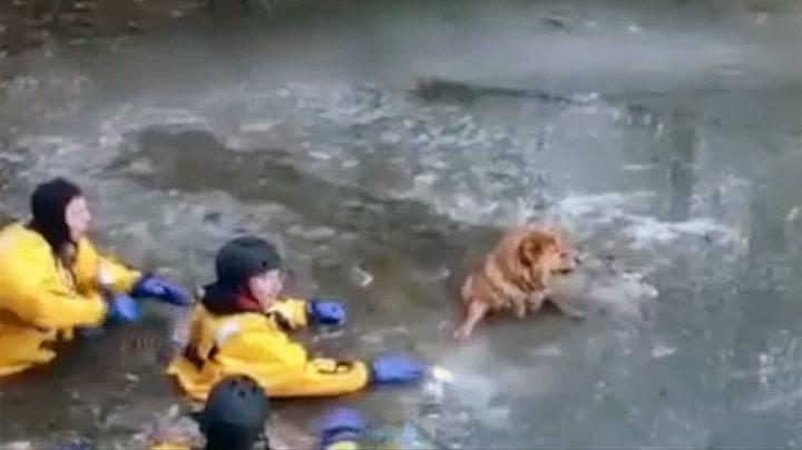 Hunden «Angel» ble reddet av isen i grevens tid