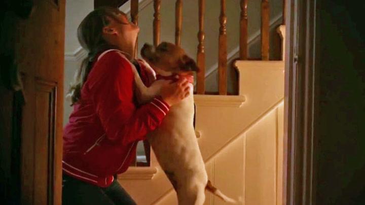 Hjerteskjærende hundereklame rører en hel verden