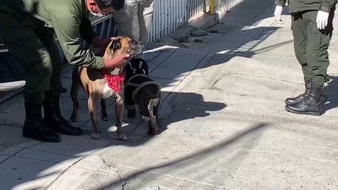 Perros callejeros son amparados por autoridades bolivianas durante cuarentena