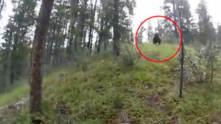 Her går bjørnen til angrep