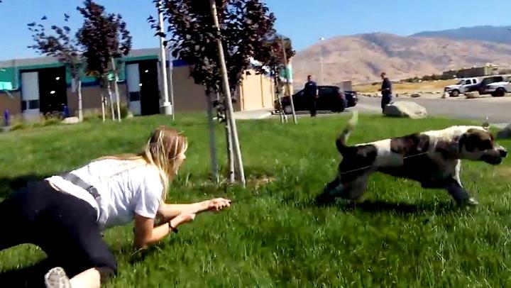 Her rives hun over ende av 50 kilos løshund