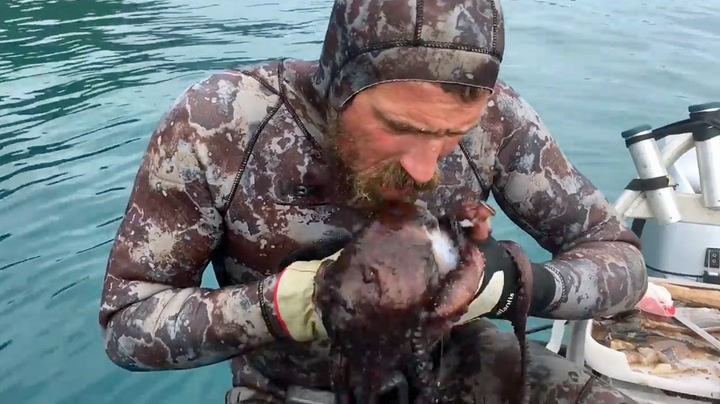 TV-stjerne drepte blekksprut med egen munn