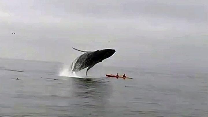 Hvalen vil så gjerne ha litt nærkontakt