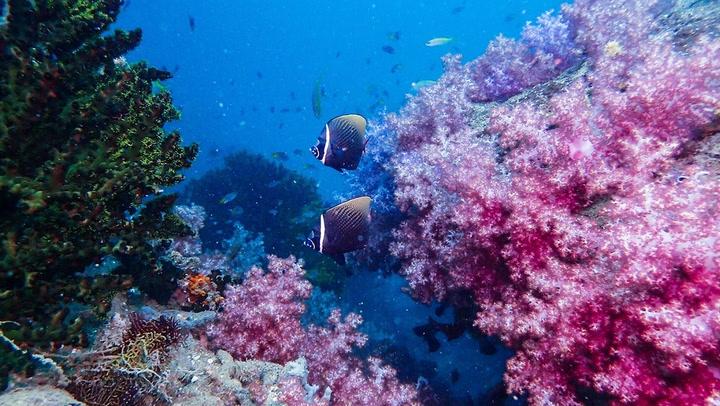 เที่ยวกระบี่ ดำน้ำดูปะการัง สวรรค์ใต้ทะเล หมู่เกาะโลคอล