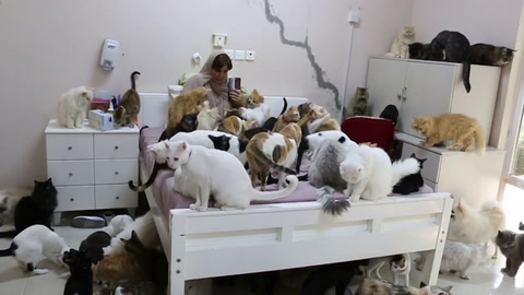 La mujer de los 500 gatos de Omán