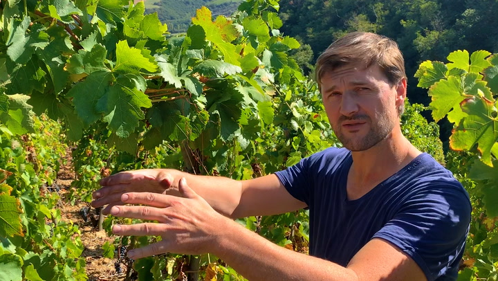 In the Vineyard with Stéphane Ogier: The Canopy Connection