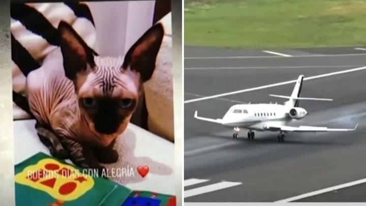 Cristiano Ronaldo envía en jet privado a gato que sufrió accidente