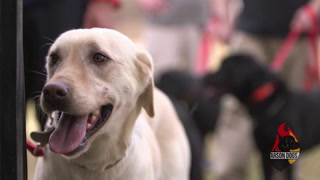 Arson Dogs | The Arrival (Episode 1)