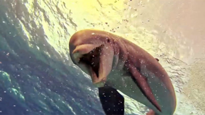 You have to watch this! Dolphin's amazing underwater show