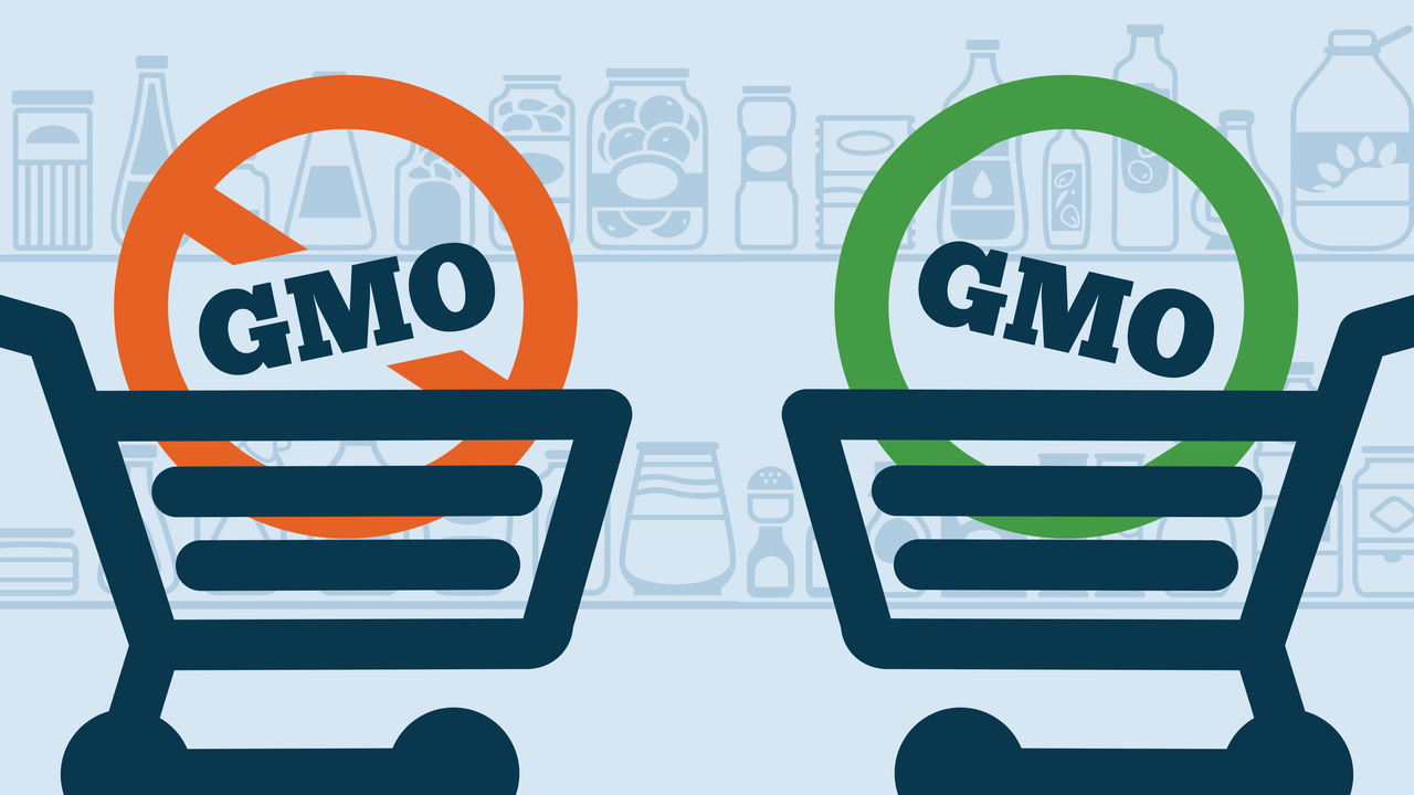 Are GMOs Good or Bad?