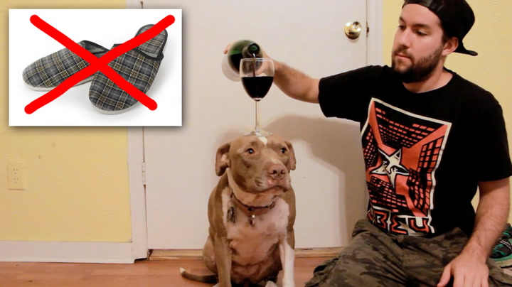 Et mye bedre triks å lære hunden enn å hente tøfler