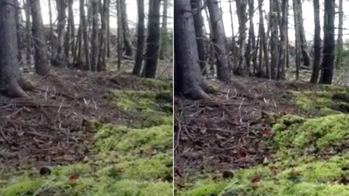 Turgåer fikk sjokk da skogen begynte å «puste»