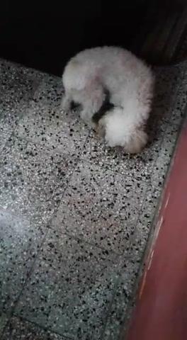 El gato Eleno sobrevivió gracias a la perrita Camila