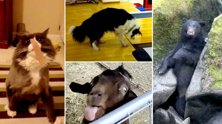 10 dyr med lattergaranti. Klarer du å ikke le?