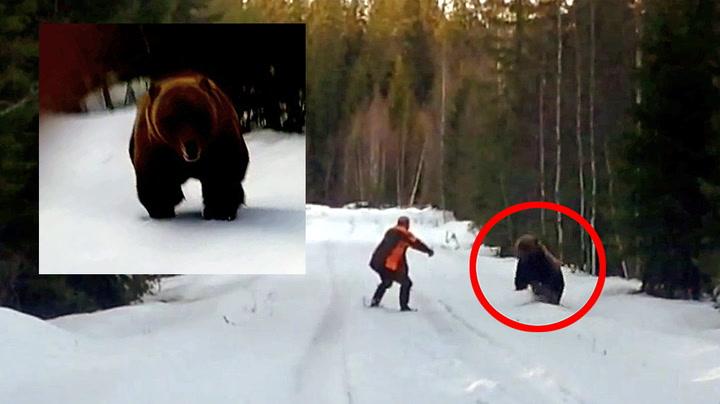 Her angriper bjørnen - Ralph svarer med et brøl