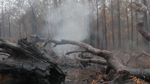 La lluvia ayuda a combatir los incendios en Australia