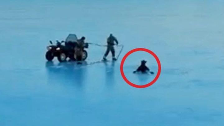 Her redder de elgen fra isen