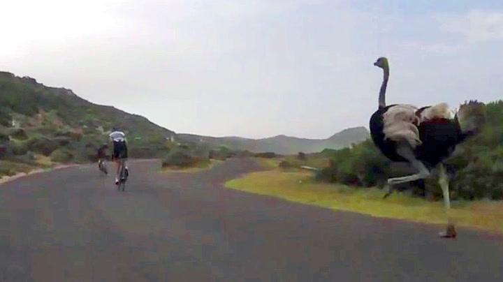 Mannevond struts på vill syklistjakt