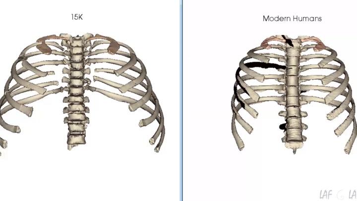 Animación del movimiento de respiración de las costillas del niño Turkana y de un humano moderno