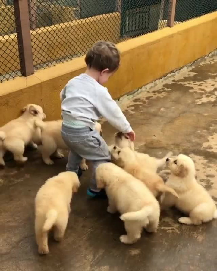 This Toddler Being Harassed By A Pack Of Puppies Might Be The Best Thing You Watch Today