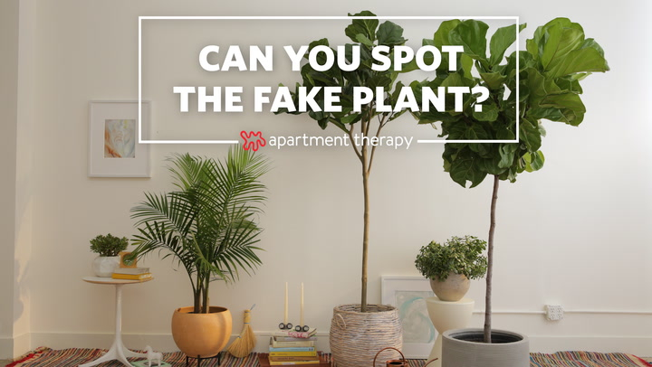 the best faux fiddle leaf fig tree apartment therapy