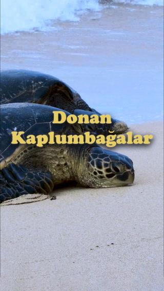 Donan kaplumbağalar