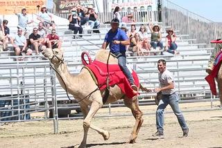 RJ reporter races on camel in Virginia City