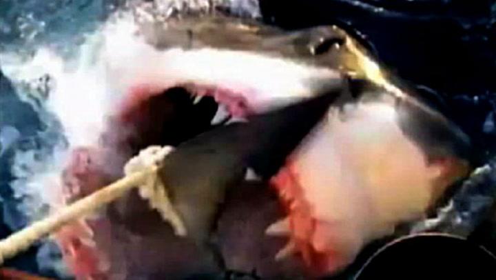 Her angriper hvithaien båten