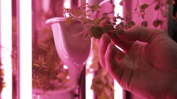 Kitchen Garden Produce Natufia Labs To Launch The Natufia Kitchen Garden At Ces 2017