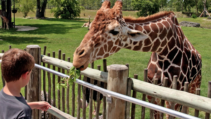 Walk on the Wild Side and Buy Your Own Zoo (Seriously)