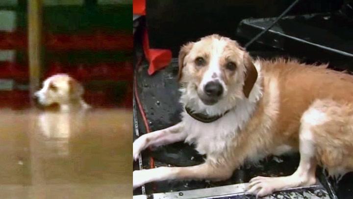 Hjelpeløs hund reddet fra flommen i siste liten