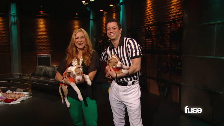 Shows:Top 20:Puppy Bowl's Got Pigs and Kitties, Too