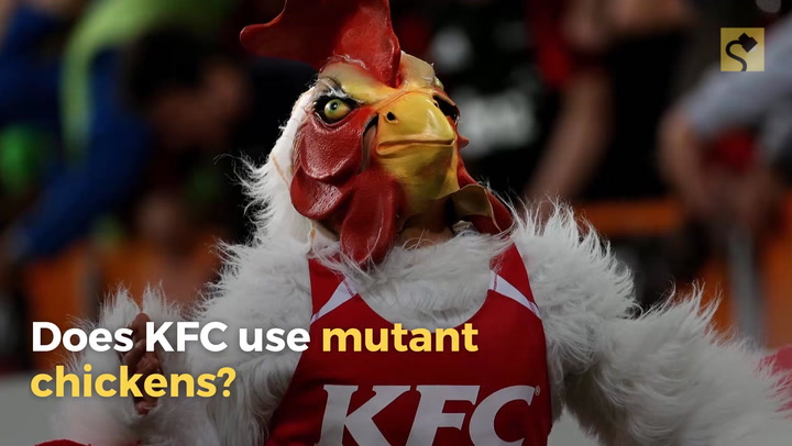 Aninimal Book: FACT CHECK: Does KFC Use Mutant Chickens?