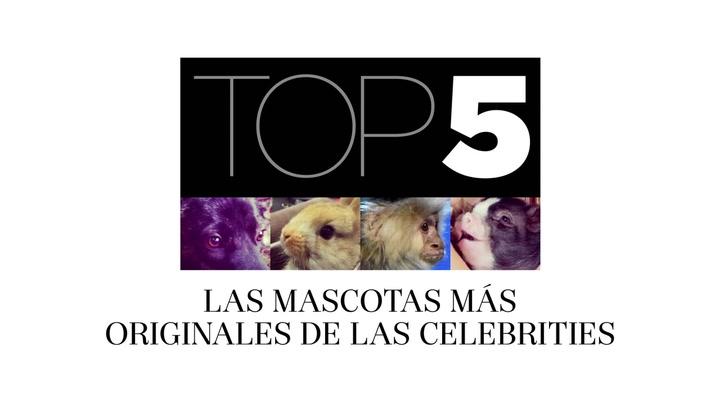 TOP5: Las mascotas más originales de los famosos