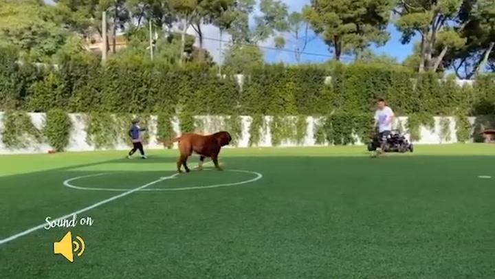 Messi se relaja en casa jugando a fútbol en el jardín con sus hijos y su perro Hulk