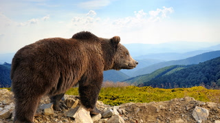 Colorado police had to warn people to keep their kids away from bears – you already know why