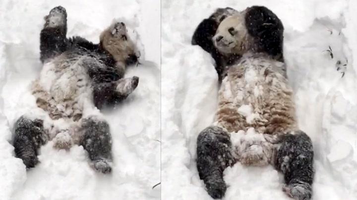 Råd fra en panda: Derfor skal du elske vinteren