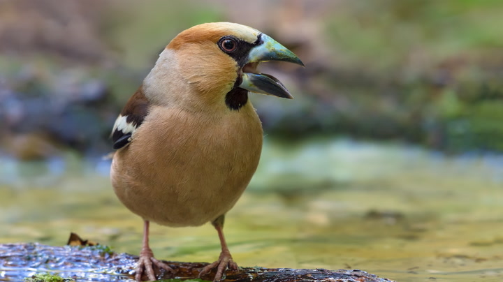 Watch Now: 6 Sounds Birds Make and What They Mean