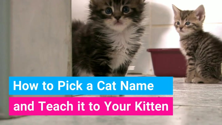 110 Clever Cat Names You Ll Love Great Funny Ideas Find Cat Names