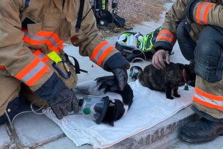 Las Vegas firefighters give oxygen to cats – VIDEO