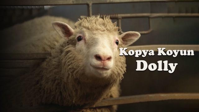 Kopya koyun Dolly'i hatırlayan?
