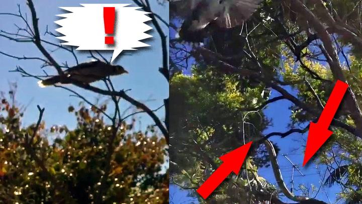 Fuglenes desperate skrik varslet om skjult fare