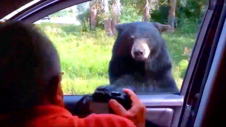 Sulten bjørn åpnet bildør – skremte vettet av barnefamilie