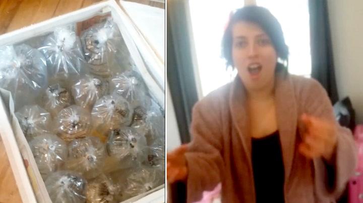 Hun bestilte nytt spisebord – fikk 150 levende fisk